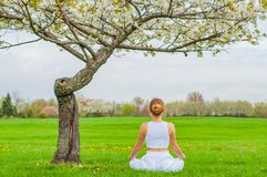 Beautiful woman is practicing yoga sitting in Lotus pose near blossom tree stock image