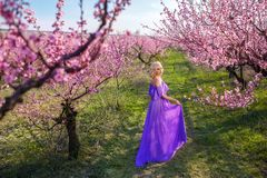 Beautiful woman in purple dress standing in a flower garden, Sunny spring day. A beautiful woman in a purple dress stands in a blooming pink garden of peaches, a Royalty Free Stock Images