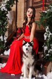 Beautiful woman in red evening dress sitting on the steps with her dog, Husky. on a background of a Christmas decorated room. stock images