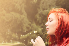Beautiful woman with red hair blows into dandelion Royalty Free Stock Photography