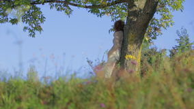 Beautiful woman rests on a tree. Slow motion footage of a beautiful woman leaning on a big tree and resting in the beautiful scenery on the sunny day stock video
