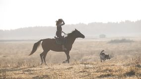 Beautiful woman riding horse at sunrise field. Young cowgirl at brown horse stock video