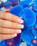 Beautiful woman's hand with perfect french manicure Stock Photography