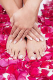 Beautiful woman's hands and legs with red rose petals Royalty Free Stock Photography