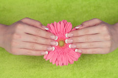 Beautiful woman's hands and nails with french manicure Royalty Free Stock Photography