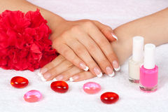 Beautiful woman's hands with perfect french manicure Royalty Free Stock Image