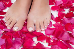Beautiful woman's legs with red rose petals. Elegant woman's pedicured feet with red rose petals stock photography