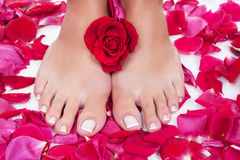 Beautiful woman's legs with red rose petals Stock Photo