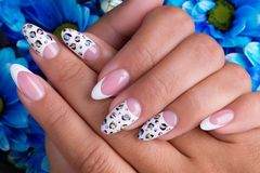 Beautiful woman's nails with french manicure Stock Image