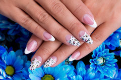Beautiful woman's nails with french manicure Royalty Free Stock Images