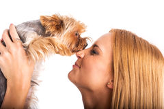 Beautiful woman's Yorkshire terrier dog gives kisses Royalty Free Stock Photos