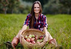 Beautiful woman sitting near a basket of apples Royalty Free Stock Images