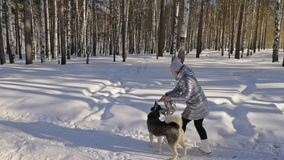Beautiful woman and small child walking in winter forest with of husky dog. Happy young mother with daughter in the. Winter park with huskies dog. Friendship stock footage