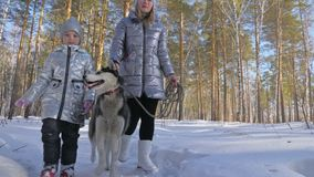 Beautiful woman and small child walking in winter forest with of husky dog. Happy young mother with daughter in the. Winter park with huskies dog. Friendship stock video
