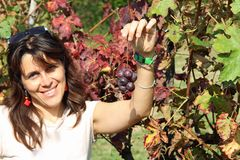 Beautiful woman smiling  with a little bunch of grapes in autumn Royalty Free Stock Photos