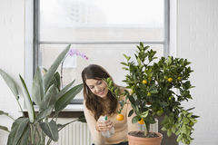 Beautiful Woman Spraying Water On Orange Growing On Plant Royalty Free Stock Images