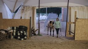 A beautiful woman takes her horse to the stable stock video footage