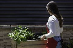 Beautiful woman taking care of urban vegetables garden royalty free stock images