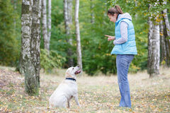 Beautiful woman training dog Royalty Free Stock Image