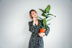 Beautiful woman in trendy dress with plant in a pot. Stay near white wall at home royalty free stock image