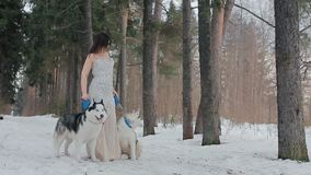 Beautiful woman and two dogs Siberian husky stock video footage