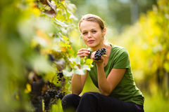 Beautiful woman in vineyard Stock Image
