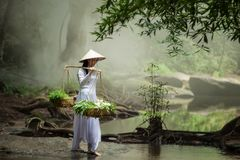 Beautiful woman wearing a hat Dress Ao Dai traditional Vietnamese dress standing in the forest. royalty free stock photography