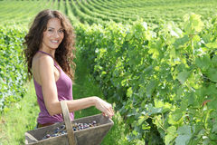 Beautiful woman in wine rows Stock Photos