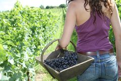 Beautiful woman in wine rows Royalty Free Stock Photos