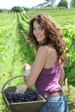 Beautiful woman in wine rows Stock Photography