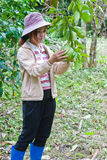Beautiful woman working in the grapefruit garden. Royalty Free Stock Photography