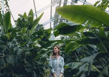 Beautiful woman working in greenhouse. And looking at plants. Happy female gardener in plant nursery Royalty Free Stock Photos