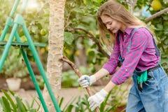 Beautiful woman working in her backyard garden stock image