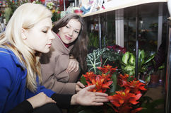 Beautiful womans in a flower shop Royalty Free Stock Photos