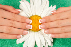 Beautiful womans hands and nails with french manic. Beautiful womans hands with french manicure on chamomile flower Royalty Free Stock Photography