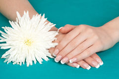 Beautiful womans hands and nails with french manic Royalty Free Stock Photos