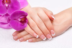 Beautiful womans hands and nails with french manic Stock Image
