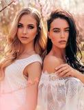 Beautiful  women in elegant dresses posing among flowering peach trees in garden royalty free stock images