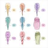 Beautiful women with hair braids in various styles. Vector illustration eps 10 vector illustration