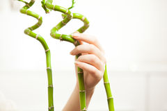 Beautiful women hand holding bamboos Royalty Free Stock Photos