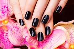 Beautiful women hands with black manicure Stock Images