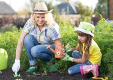 Beautiful woman and chid daughter planting seedlings in bed in domestic garden at summer day. Gardening activity with royalty free stock photography