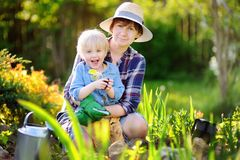 Beautiful woman and her cute son planting seedlings in bed in the domestic garden at summer day Royalty Free Stock Image