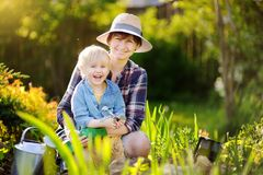 Beautiful woman and her cute son planting seedlings in bed in the domestic garden at summer day. Beautiful women and her cute son planting seedlings in bed in stock image