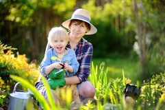 Beautiful woman and her cute son planting seedlings in bed in the domestic garden at summer day. Beautiful women and her cute son planting seedlings in bed in stock images