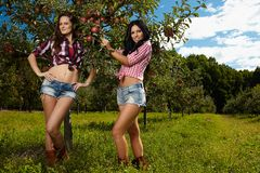 Beautiful women in the orichard Stock Photography