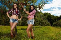 Beautiful women in the orichard Stock Photography