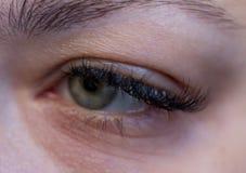Beautiful women`s eyelashes. stock photography