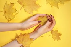 Beautiful women`s hands on paper yellow background, autumn hand care concept.  royalty free stock photos