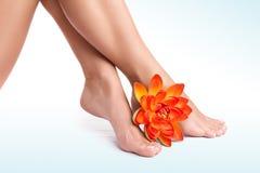 Beautiful women's legs Stock Images